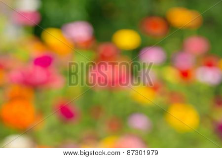 Blurred background of summer flowers in the garden.