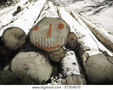 Cut Tree Trunks And Smiling Trunk In A Forest