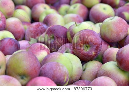 Apples Empire Fraichement Picked