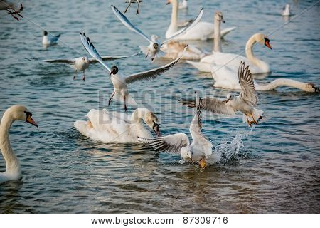 Birds of the sea