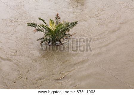 PRAGUE, CZECH REPUBLIC - JUNE 2, 2013: Palm tree in a pot, partially flooded by the swollen Vltava River, in Prague, Czech Republic.