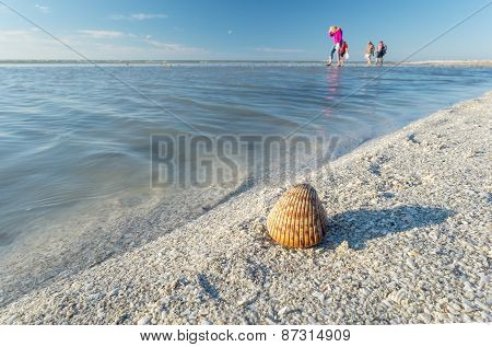Collecting Seashells on a Sandbar During Low Tide