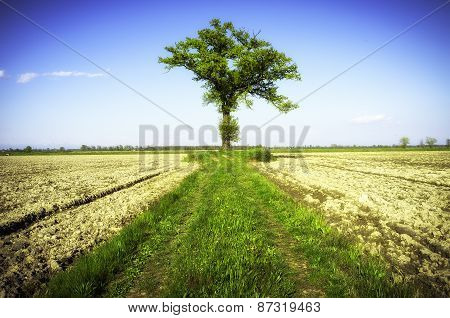 Lonely tree. Color image