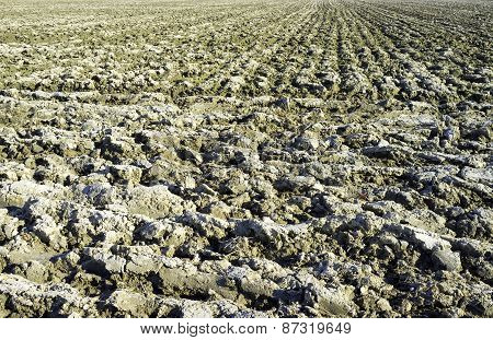Plowed field in springtime. Color image