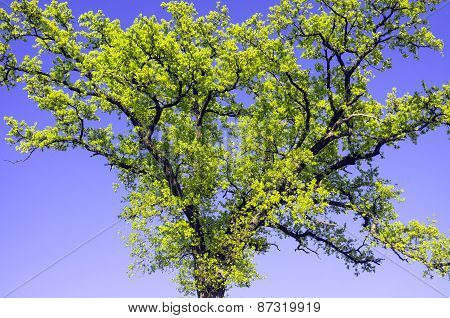 Tree branches in springtime. Color image