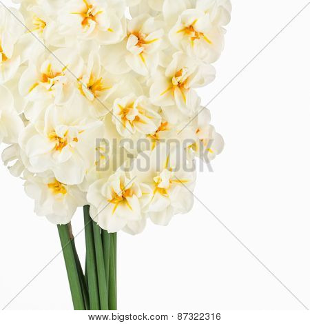 White And Orange Narcissus