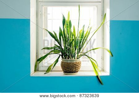 Potted plant standing on the window backlit. Fresh green color