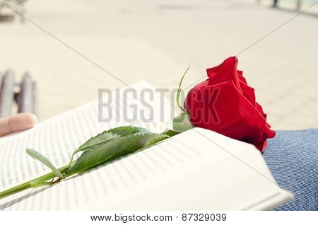 closeup of a young man with a red rose on an open book for Sant Jordi, the Saint Georges Day, when it is tradition to give red roses and books in Catalonia, Spain