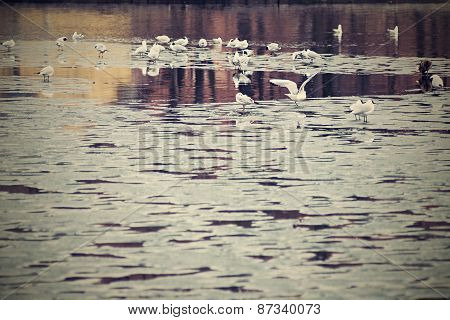 White Seagulls On Thawed Snow Of A Spring Pond