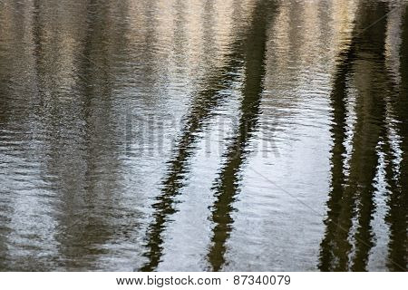 Reflection Of The Trunks Trees In Water Ripples
