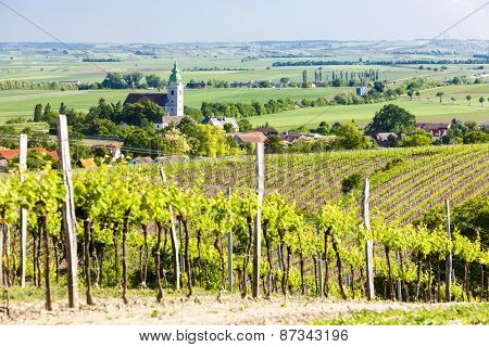 vineyard near Unterretzbach, Lower Austria, Austria