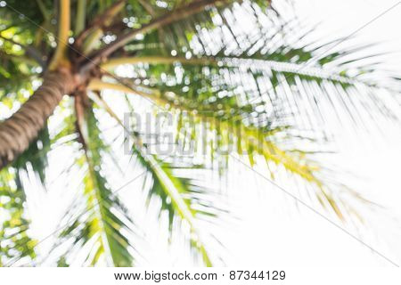 Abstract Background Of Blurred Coconut Trees, Depth Of Focus.