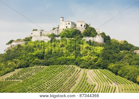 ruins of Falkenstein Castle with vineyard, Lower Austria, Austria