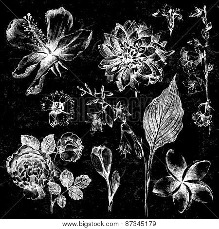collection of 7  highly detailed hand drawn flowers on black background