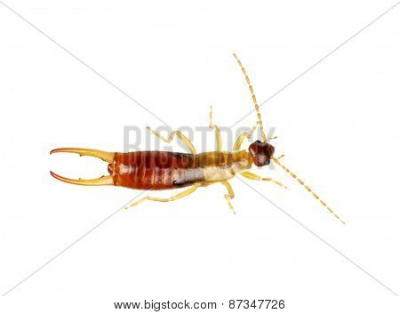 beetle isolated on a white background