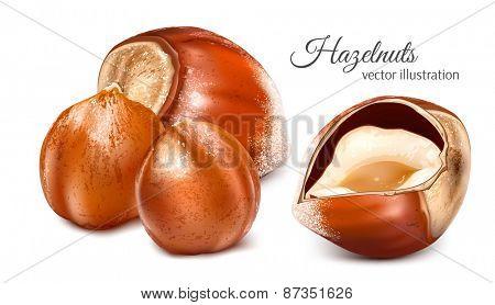 Hazelnuts with kernels. Vector illustration