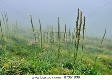 High Alpine Landscape Tundra In Heavy Fog In The Morning