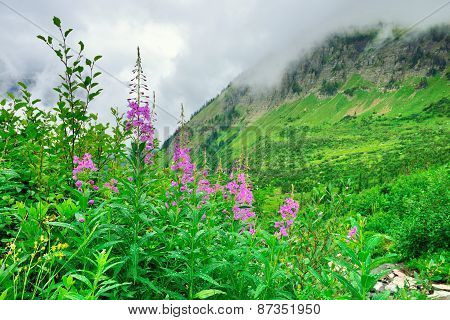 High Alpine Tundra Flowers And Heavy Fog
