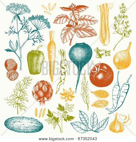 Vintage healthy food illustration.