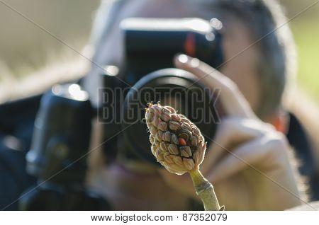 Taking Pictures Of Magnolia Grandiflora Seeds