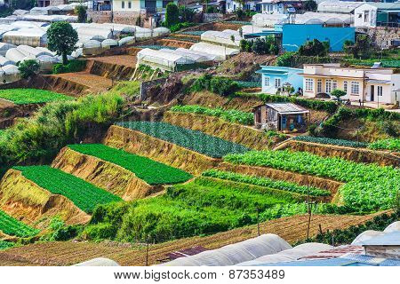 Vegetable Fields And Housein Highland, Dalat, Vietnam.