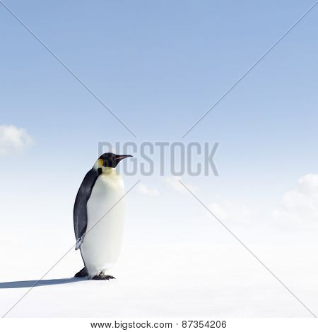 Emperor Penguin in Antarctica