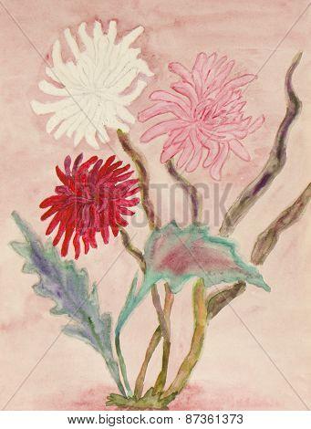 Three Chrysanthemum, Watercolours