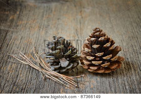 Two Fir Cones With Branches