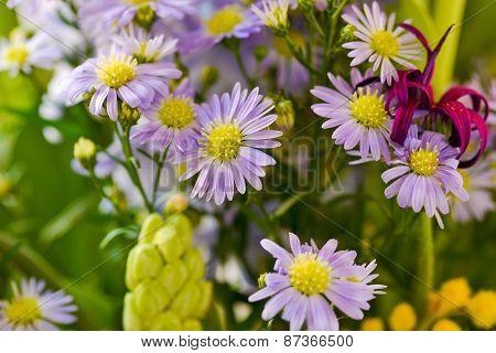 Amazing Plain Purple Flowers