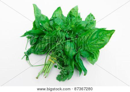 Variety Fresh Mediterranean Herbs