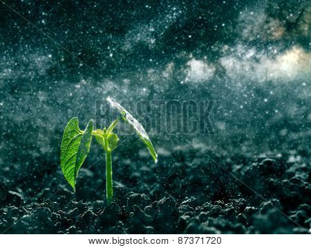 Green seedling growing on the ground in the rain. Elements of this image furnished by NASA