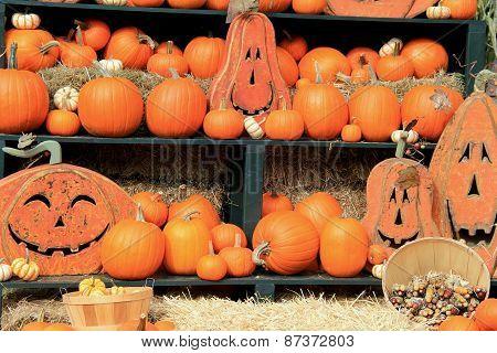 Cheerful scene of pumpkins and Jack-O-Lanterns