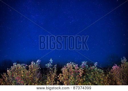 Autumn Forest Under Blue Dark Night Sky