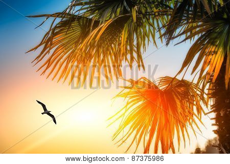 Seagull Among Palm Trees And The Sun