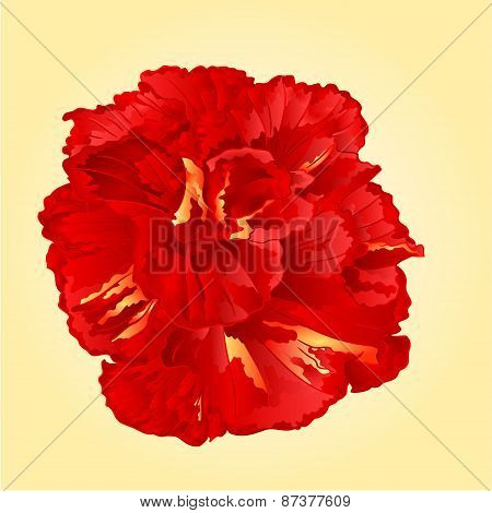Tropical Flowers Red  Hibiscus Vector
