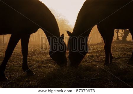 Silhouettes of two horses sharing hay against foggy morning sunrise, in sepia tone