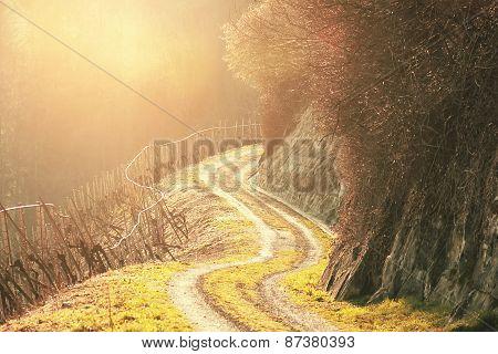 footpath at vineyard landscape