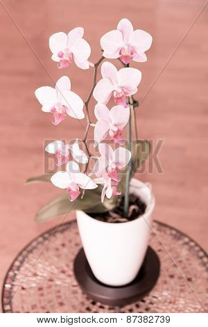 Beautiful Pink Orchid - Phalaenopsis In A Pot, Selective Focus, Shallow Dof