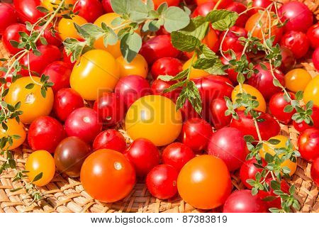 Assorted Colorful Tomatoes