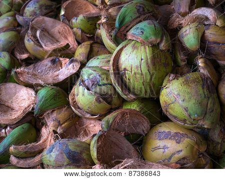 Textured background of stack of hairy brown coconuts in natural tropical light