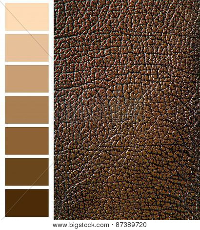 brown color complimentary chart