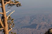 pic of smog  - View of the valley and surrounding mountains in the Coachella Valley in California with a thick and dense smog layer - JPG