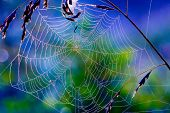 stock photo of cobweb  - Network cobwebs on the grass - JPG
