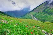 pic of fog  - high alpine tundra flowers and a road in heavy fog in glacier national park - JPG