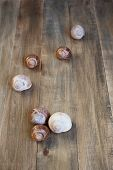 stock photo of snail-shell  - Shells of snails on the distress wooden background - JPG