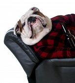 stock photo of recliner  - drinking dog  - JPG
