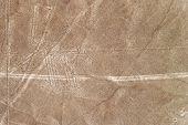 stock photo of geoglyph  - Nazca Lines dog geoglyph in Nazca - JPG