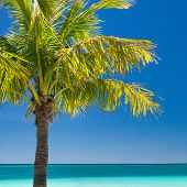 picture of boracay  - Island Boracay Philippines - JPG