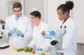 stock photo of scientist  - Scientists examining vegetables in laboratory - JPG