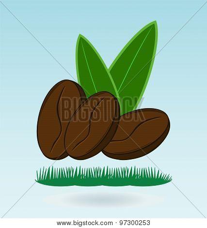 Coffee Bean Natural, Grass Concept